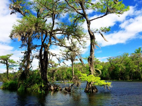 Wakulla Springs roadtrip florida