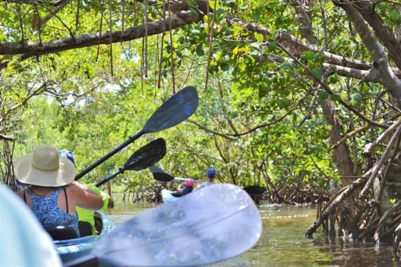 sanibel kayaking through mangroves eileen cotter wright