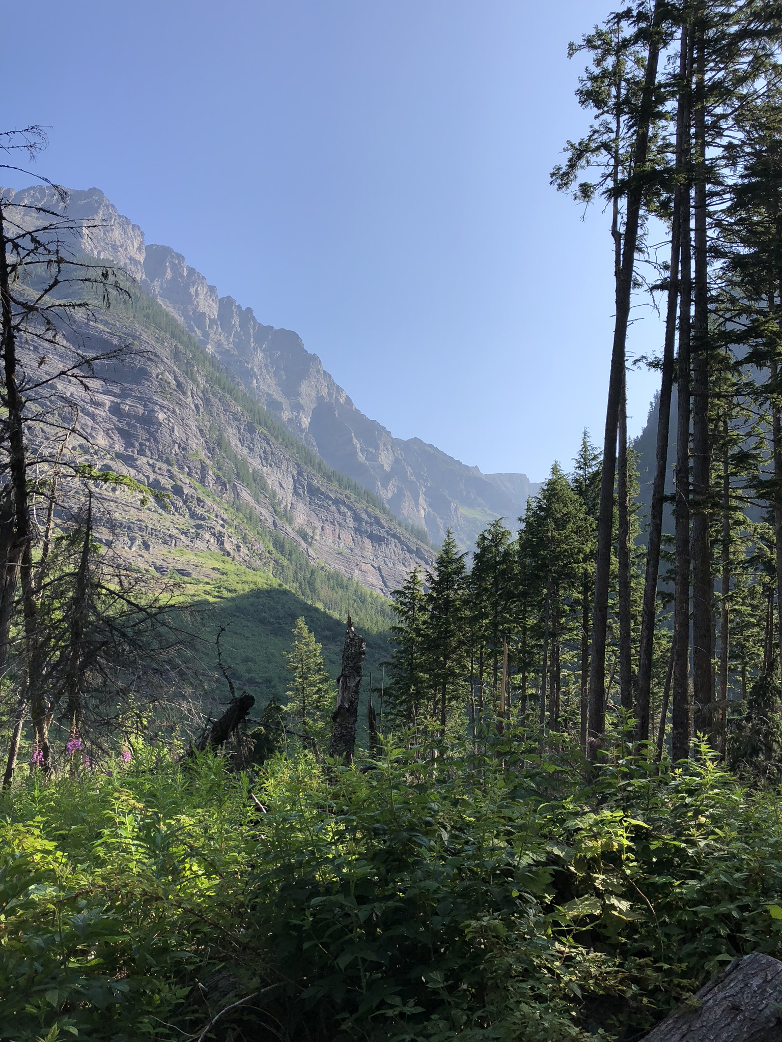Avalanche Lake Trail 4