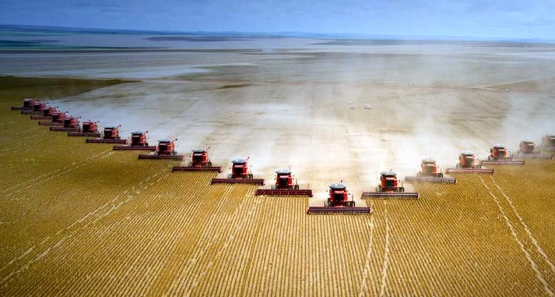 外国の大豆収穫