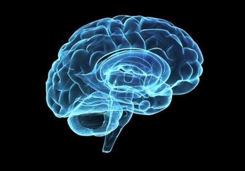 フェイスと大脳辺縁系-再建主義にからんで-