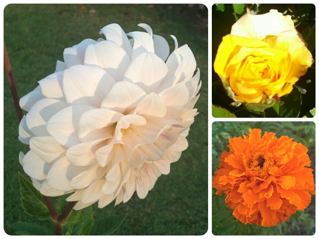 Fibonacci Flowers Math Games For Kids Blog