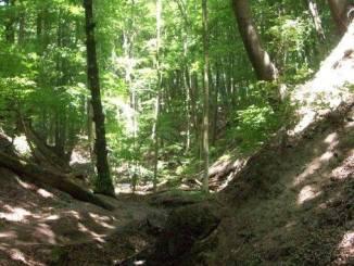Siebengebirge nature, siefen