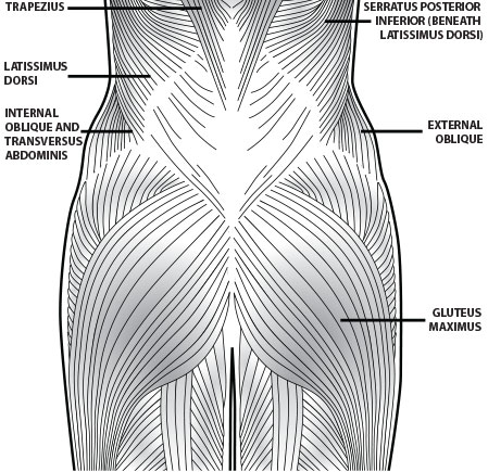 posteriorchain