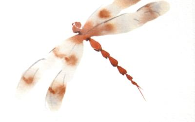 Dragonfly Brush Drawing