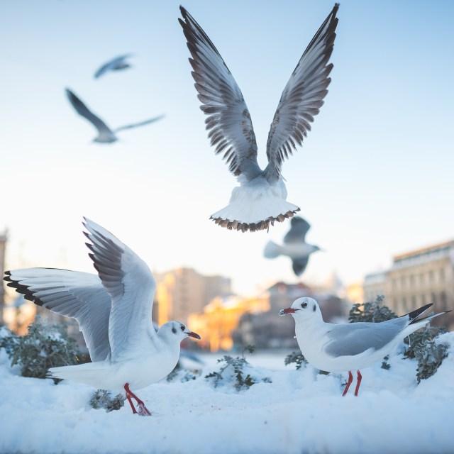 Iarna în București - Primele fotografii 2