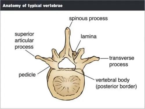 Tip Vertebra Anatomisi - El Paso Kiropraktörü