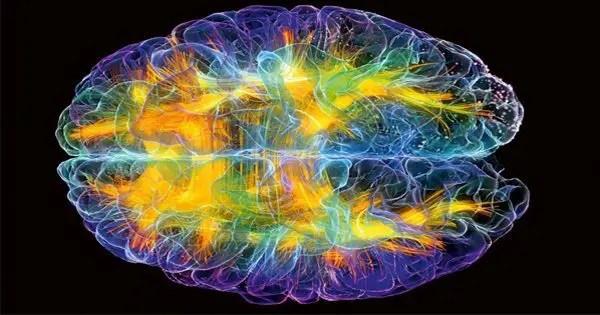 blog de imágenes del cerebro multicolor