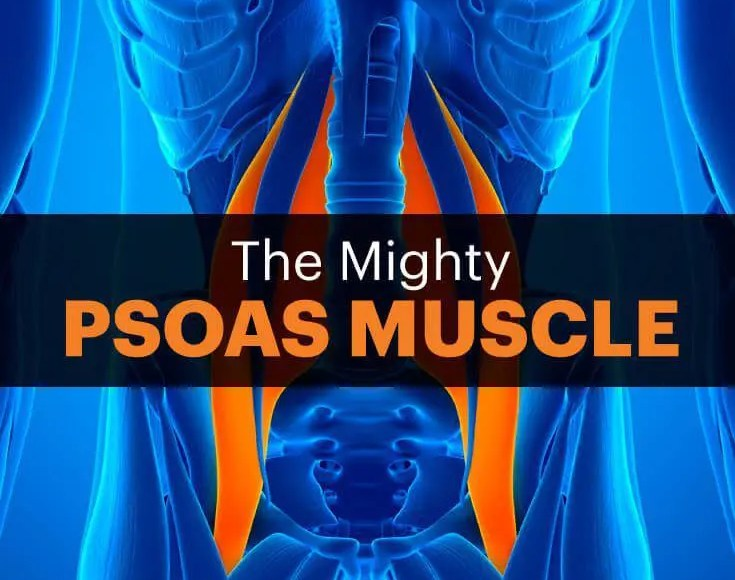 blog graphic of psoas muscle