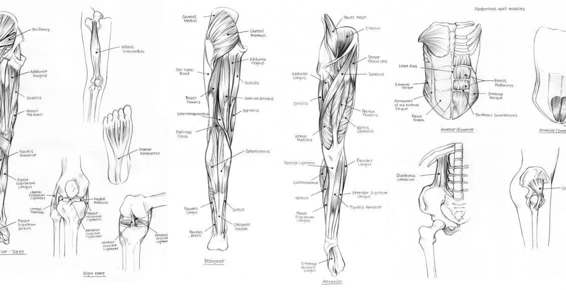 Diagram Of Nerves In Upper Leg