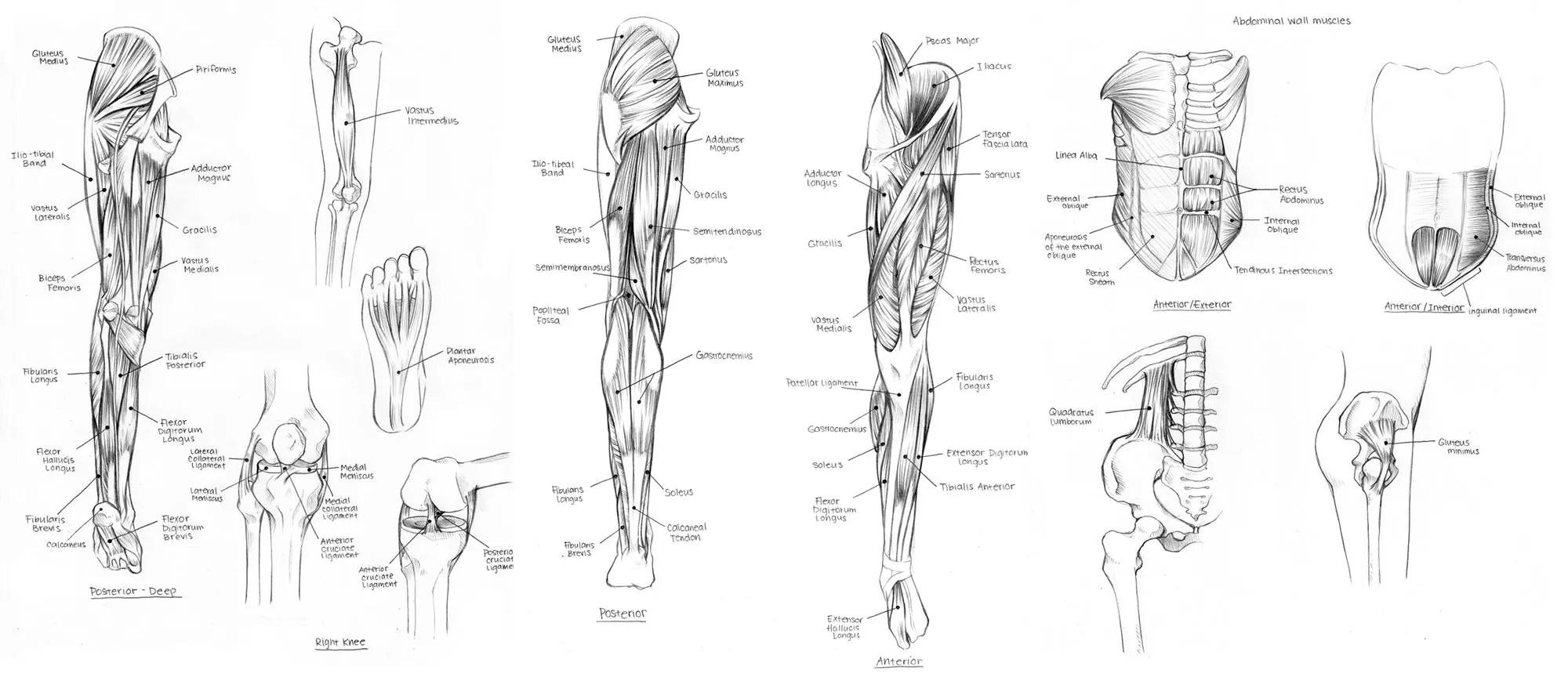 Perfecto Nervios En El Diagrama De Piernas Imágenes - Anatomía y ...