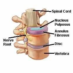 Anatomy of Intervertebral Discs - El Paso Chiropractor
