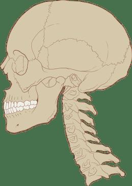Curva Cervical Normal 2 - El Paso Quiropráctico