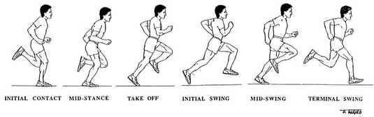 Runner's Gait Diagram - El Paso Chiropractor