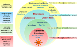 ergogenic Antioxidant Info