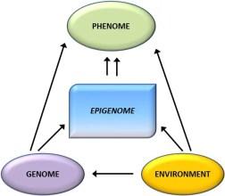 Genotype Epigenome