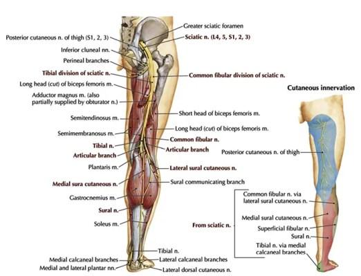 neuropathy presentation el paso tx.