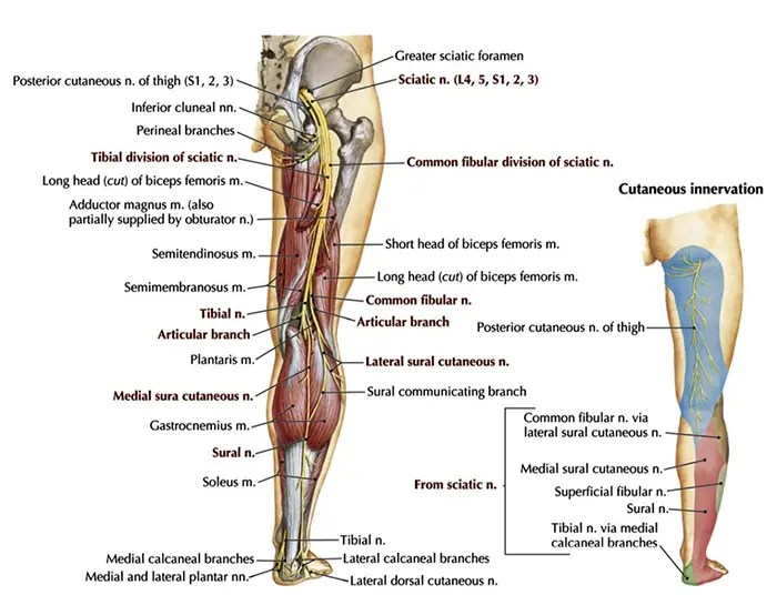 11860 Vista Del Sol, Ste. 126 Unusual Causes of Sciatica El Paso, Texas