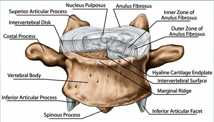 radiculopathy chiropractic care el paso tx.