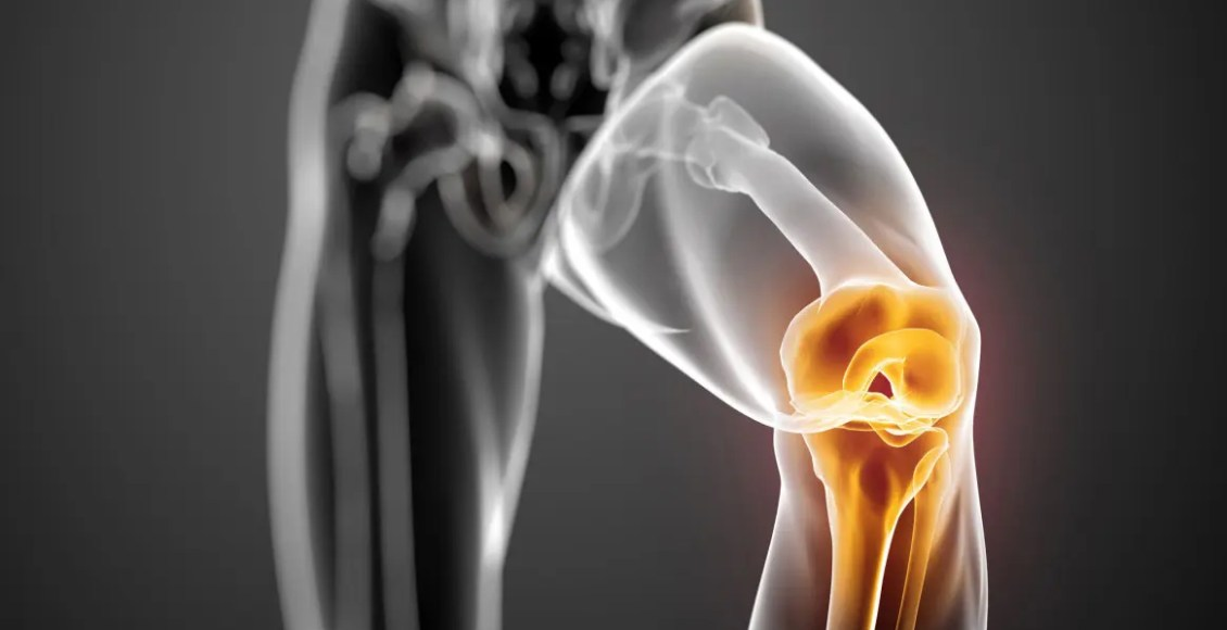 Basic Science of Human Knee Menisci Cover Image | El Paso, TX Chiropractor