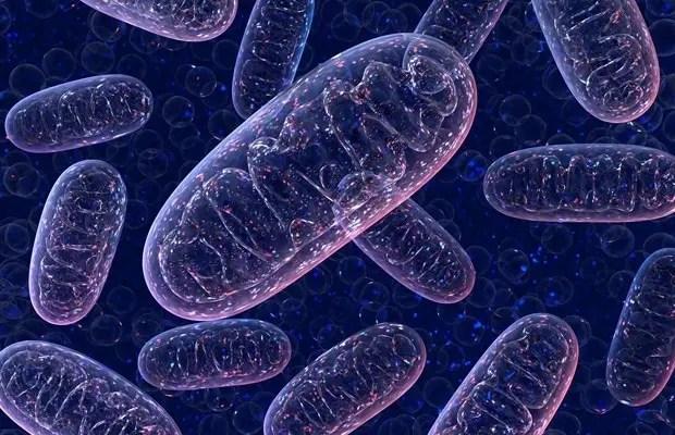 Ketone органдарынын көп өлчөмдүү ролдору | El Paso, TX Хиропрактик