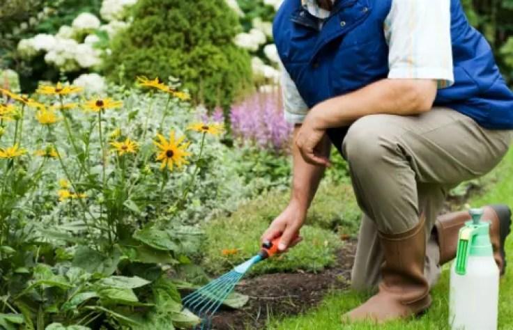 giardinaggio spinale igiene el paso tx.