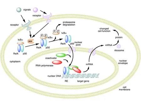 nutritional genomics el paso tx.