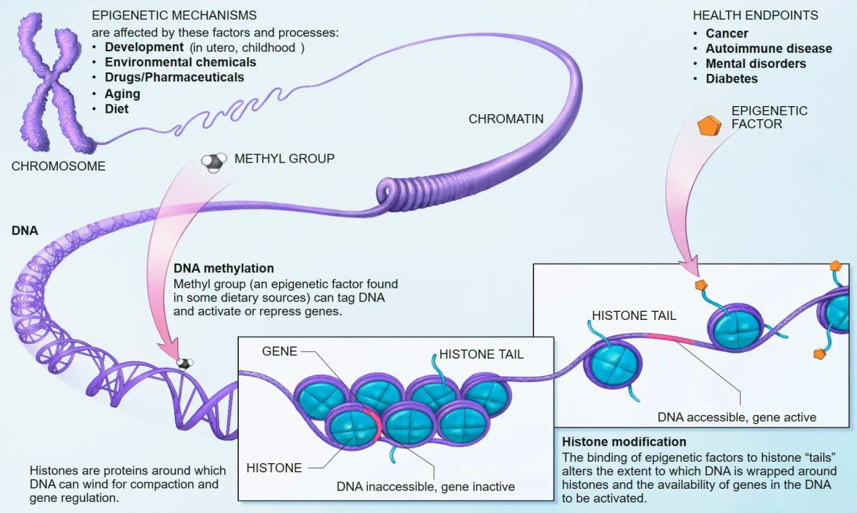 nutra genomiko el paso tx.