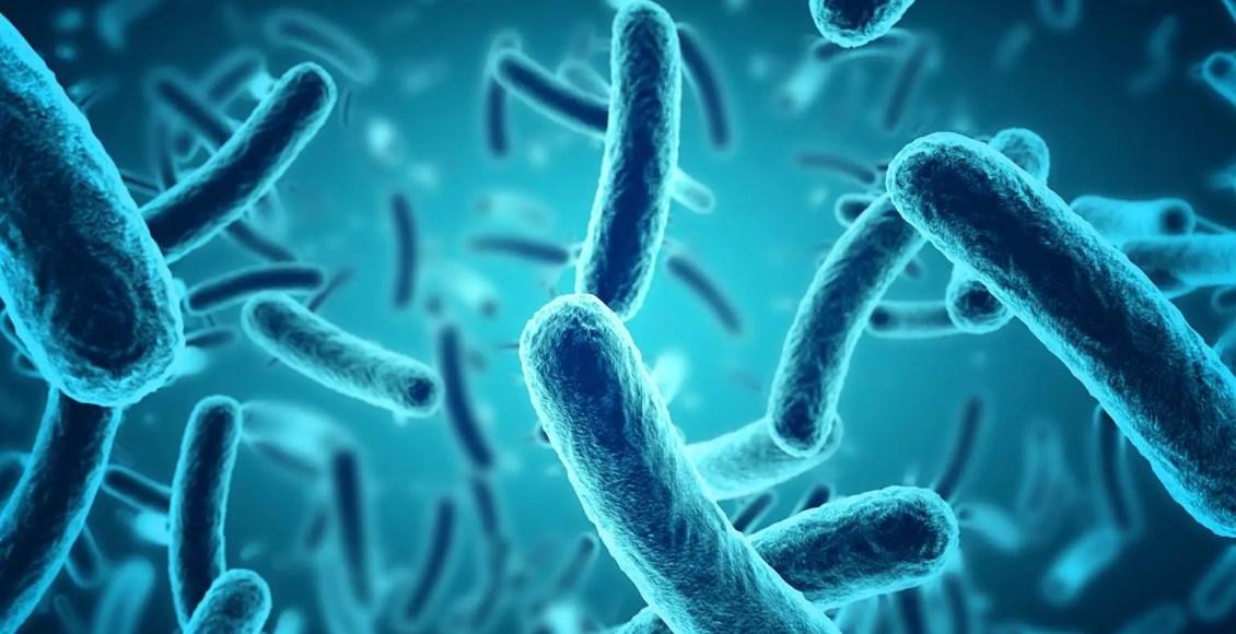 La Rolo De La Mikrobiomo En DNA-Metilado | El Paso, TX Kiropraktoro
