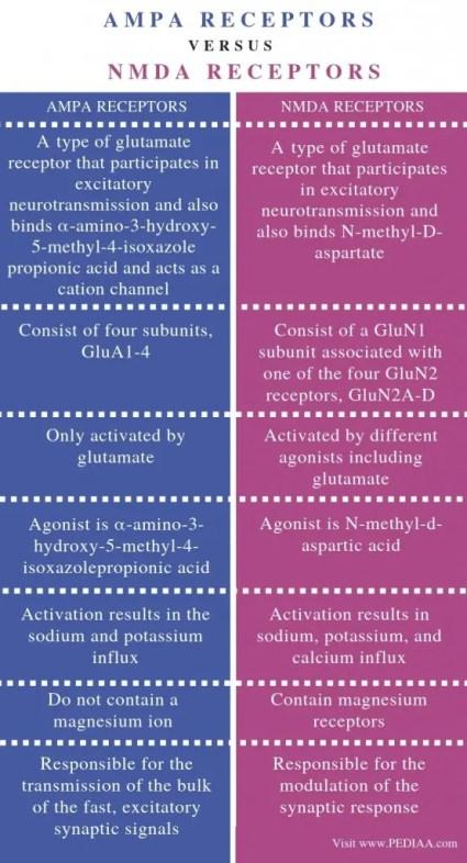 Diferencia entre el diagrama de receptores AMPA y NMDA »Wiki Ùtil El Paso, TX Quiropráctico