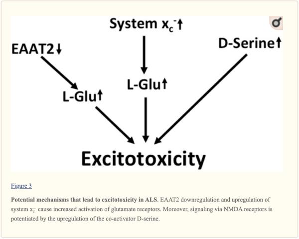 Figura 3 Potenziali meccanismi per l'eccitotossicità nella SLA | Chiropratico El Paso, TX