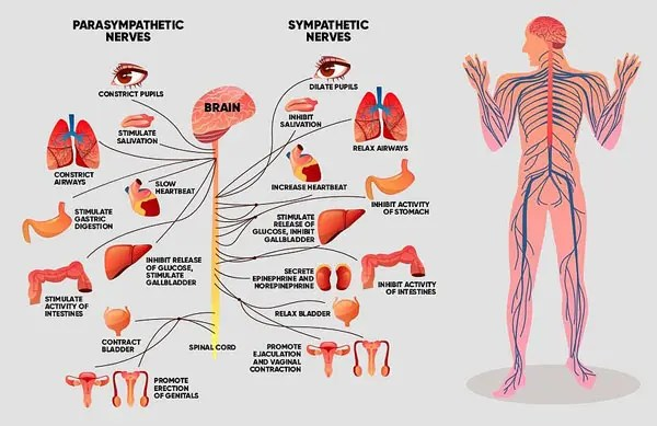 11860 Vista Del Sol, Ste. 128 Strengthening The Immune System With Chiropractic Support