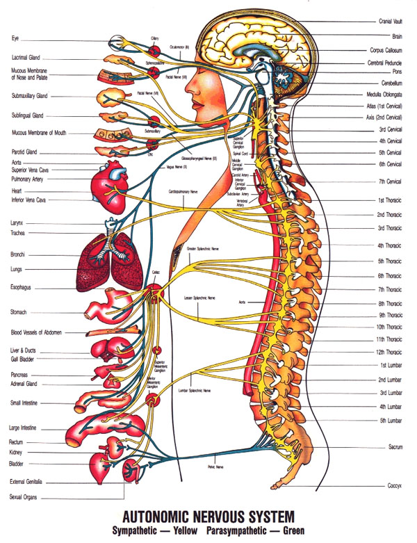 11860 Vista Del Sol, Ste. 128 Heart Health, The Spine, and The Chiropractic Connection