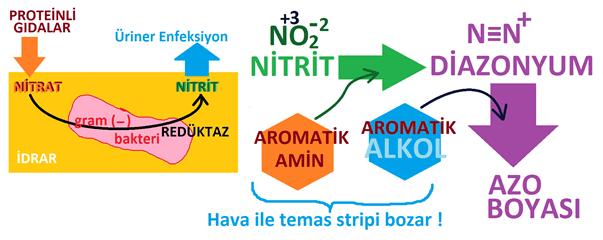 İdrar'ın Biyokimyasal Analizi : Nitrit Analizi