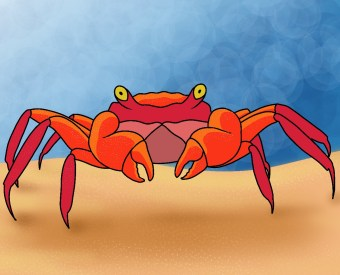 How To Draw A Crab Step 8