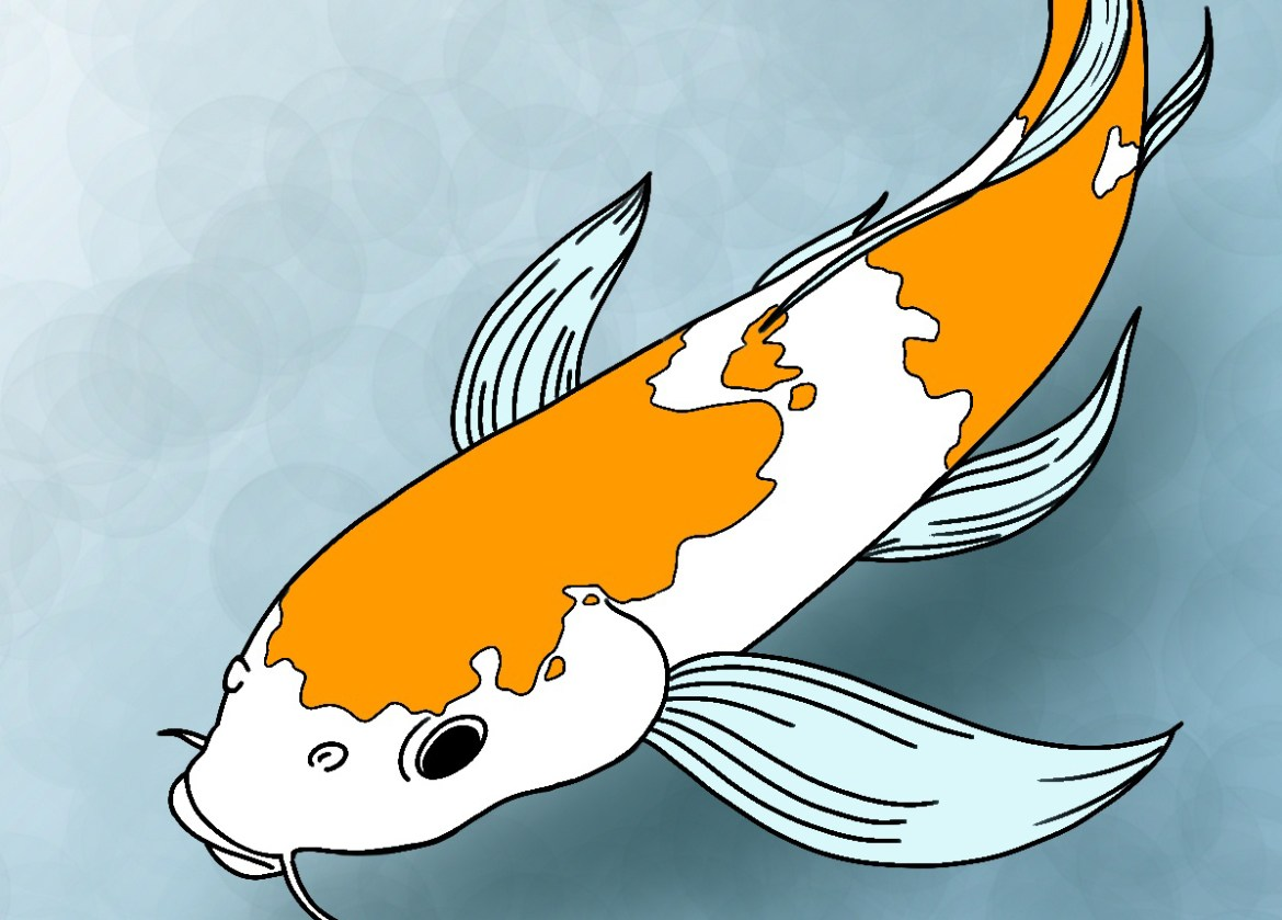 How to draw koi fish draw central for Koi fish images