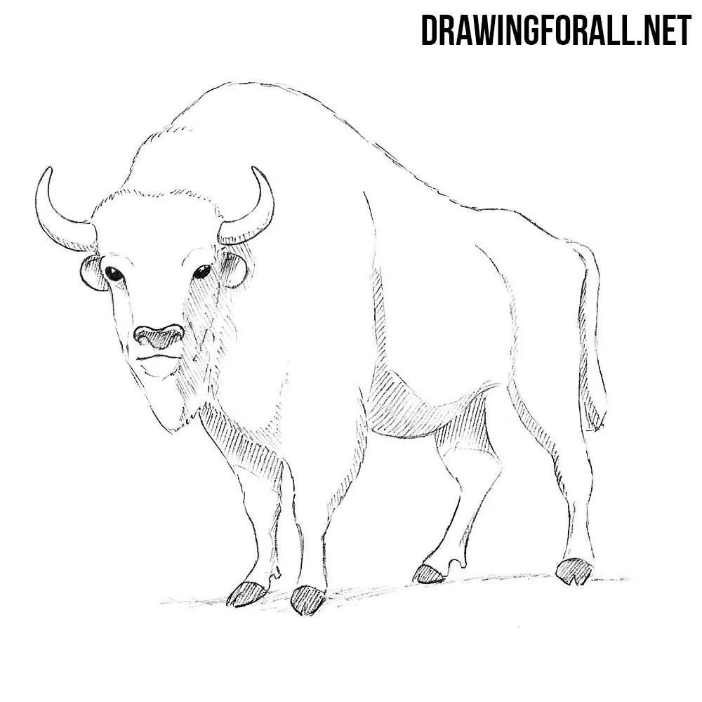 How to Draw a Bison | DrawingForAll.net