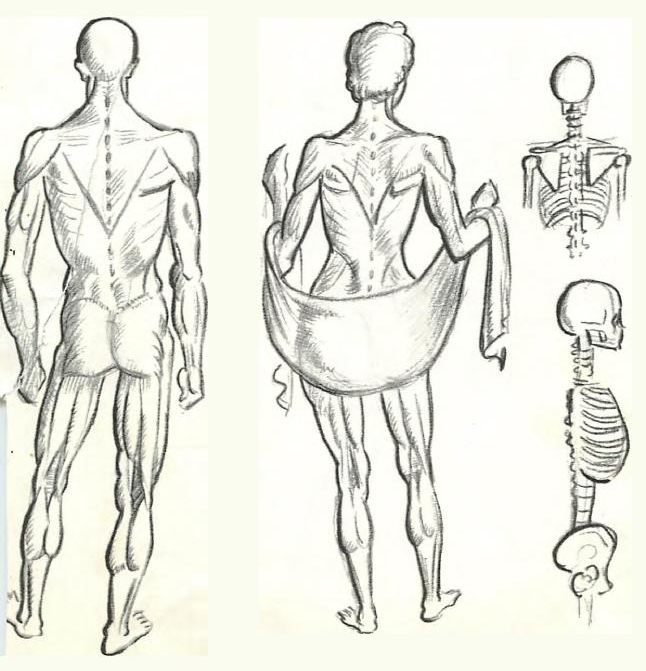 Woman Upper Body Muscle Structure
