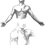 How To Draw The Human Torso And Chest Body Figure Drawing Tutorial How To Draw Step By Step Drawing Tutorials