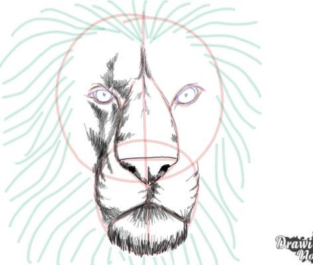 How To Draw A Lion Face Step