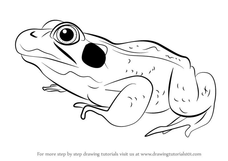 Learn How To Draw A Green Frog Amphibians Step By Step