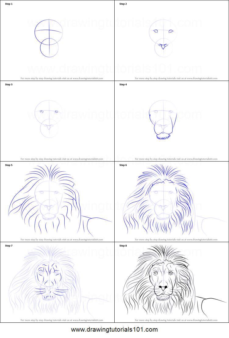 How To Draw A Lion S Face Printable Step By Step Drawing Sheet Drawingtutorials101 Com
