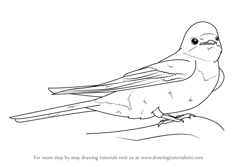 Learn How To Draw A Barn Swallow Birds Step By Step Drawing Tutorials