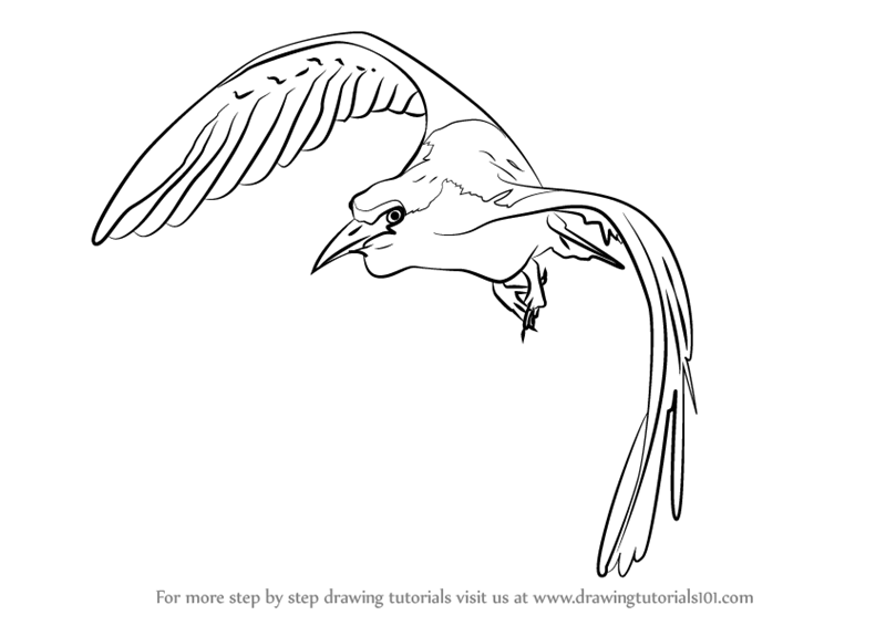 Learn How To Draw A Bird In Flight Birds Step By Step Drawing Tutorials