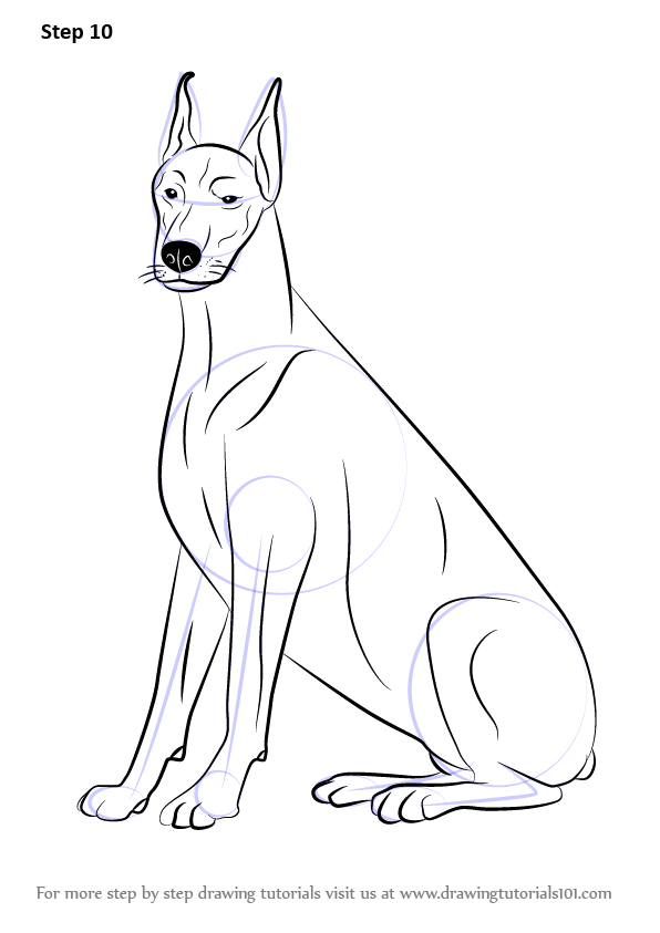 Learn How To Draw A Doberman Dogs Step By Step Drawing