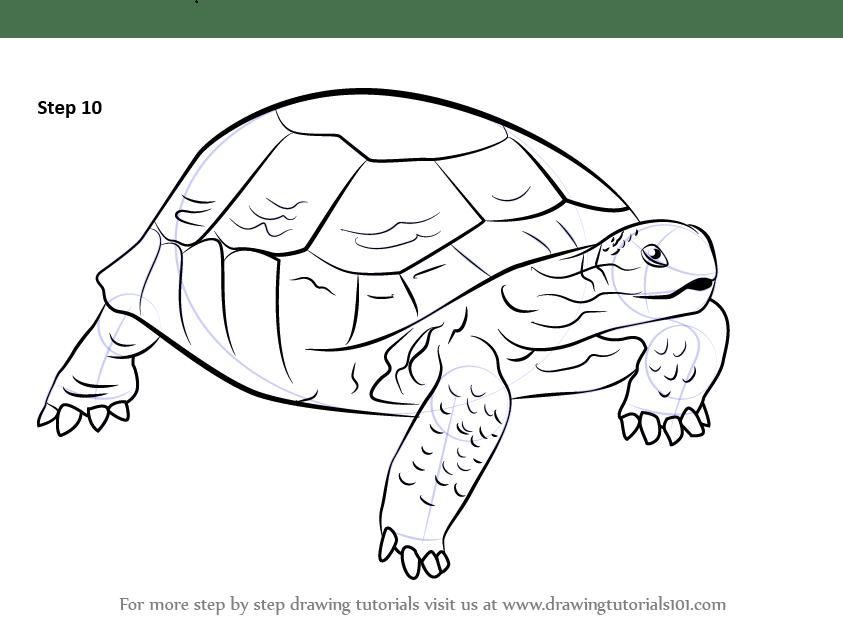 Galapagos Tortoise Head