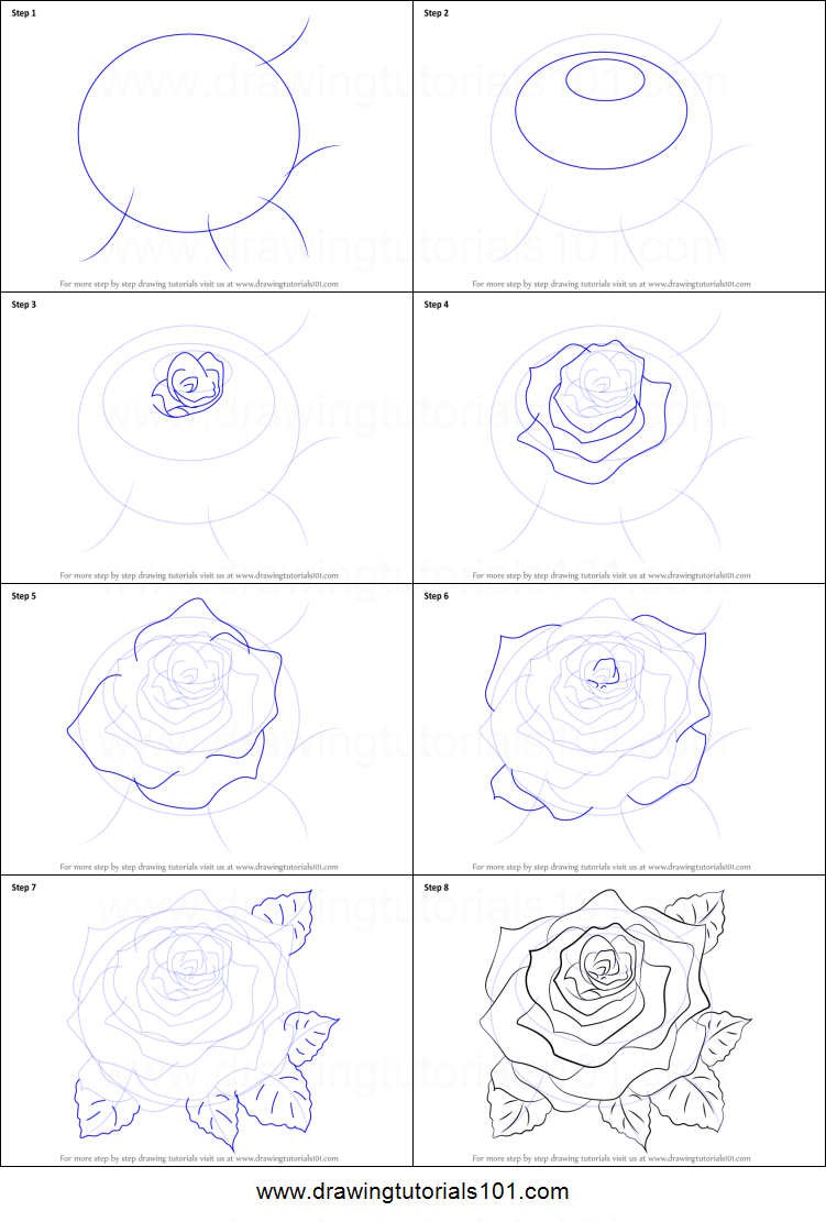 how to draw a rose bush step by step
