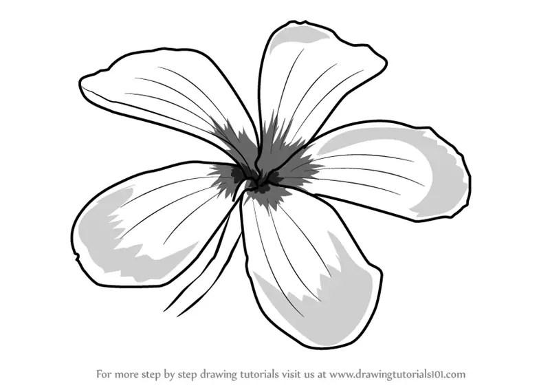 Line Leafs Drawings Plumeria Flower
