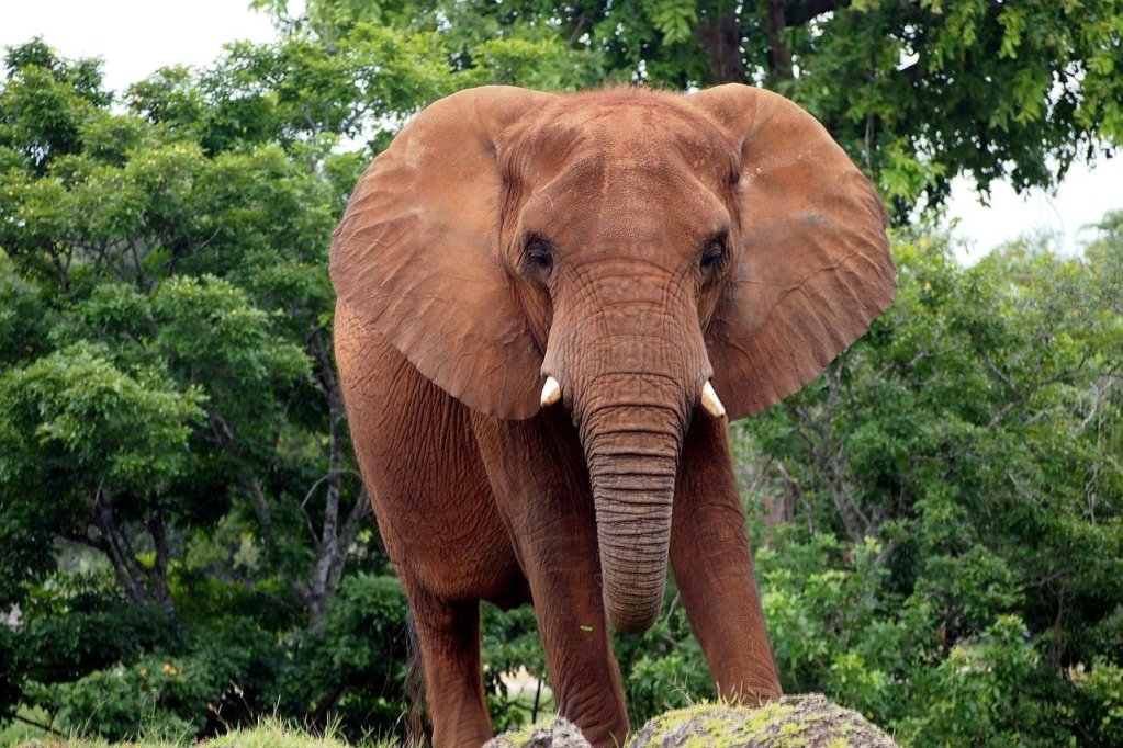 Sleeping With the Elephants: the BIG Marriage Problems