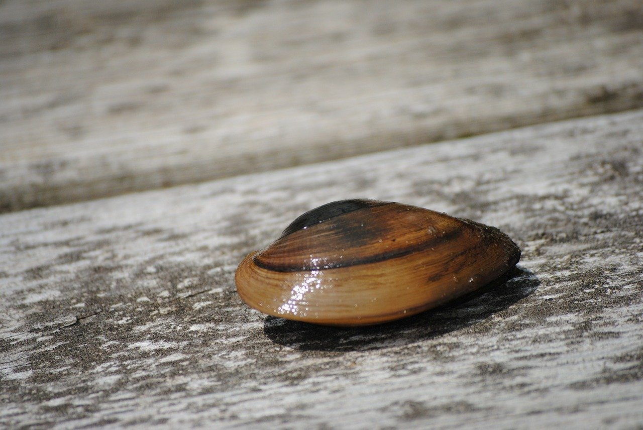 Closed shell